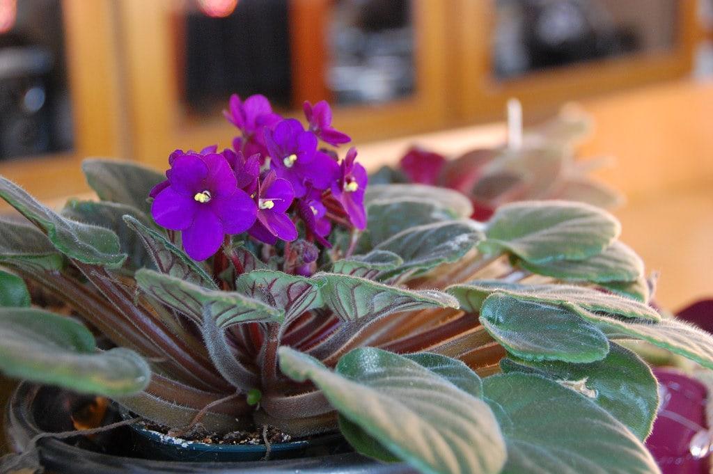Apartment Friendly Flowers