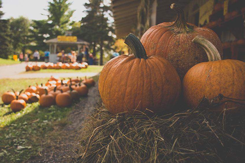 unusual pumpkin recipes