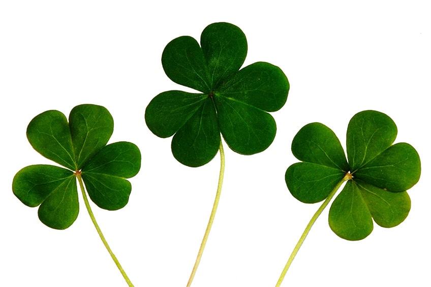 minty St. Patrick's Day recipes