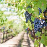 Sip Local Wine at Romano Vineyard and Winery