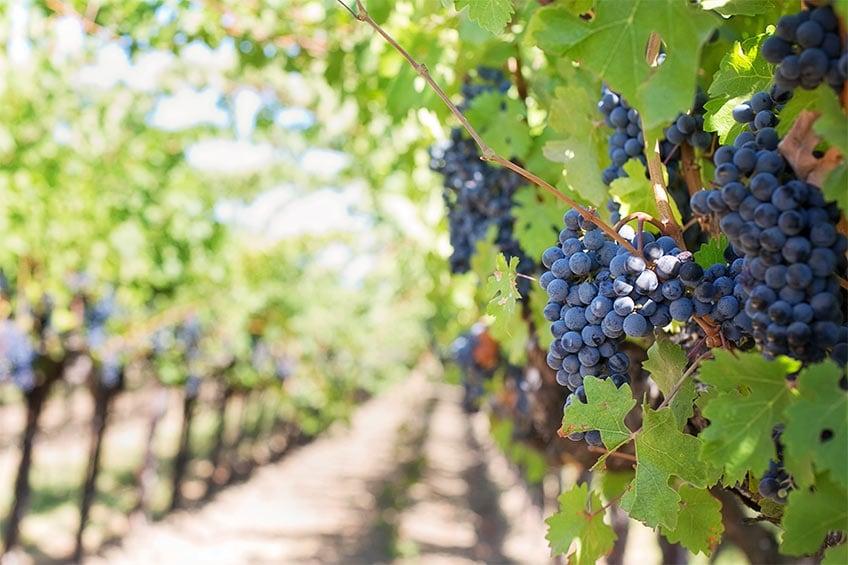 romano winery