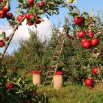 Go Apple Picking Near Waldorf For Festive Fall Fun